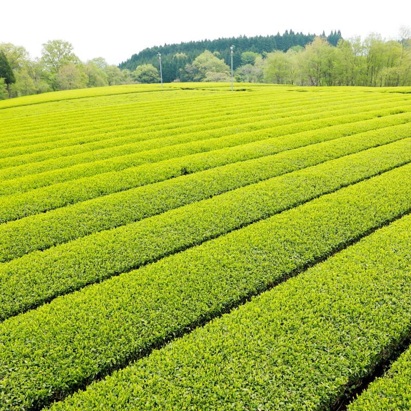 Teegarten in Japan